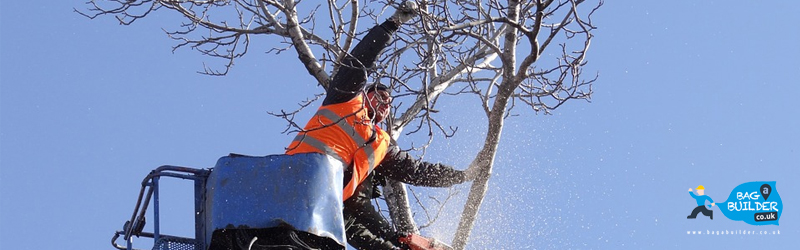 5 Things to Explore With the a Tree Surgeon