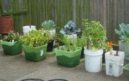 Fresh Ideas for a Brand New Yard